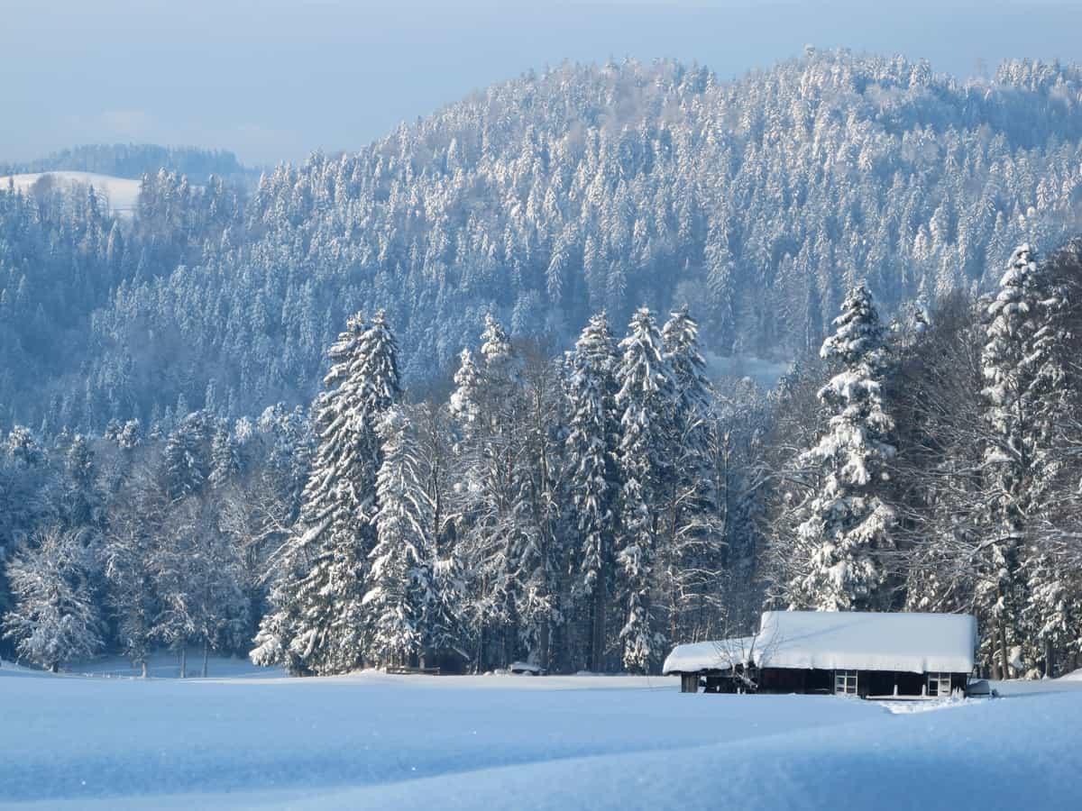"""Der """"Ruerwald"""" im Winter"""