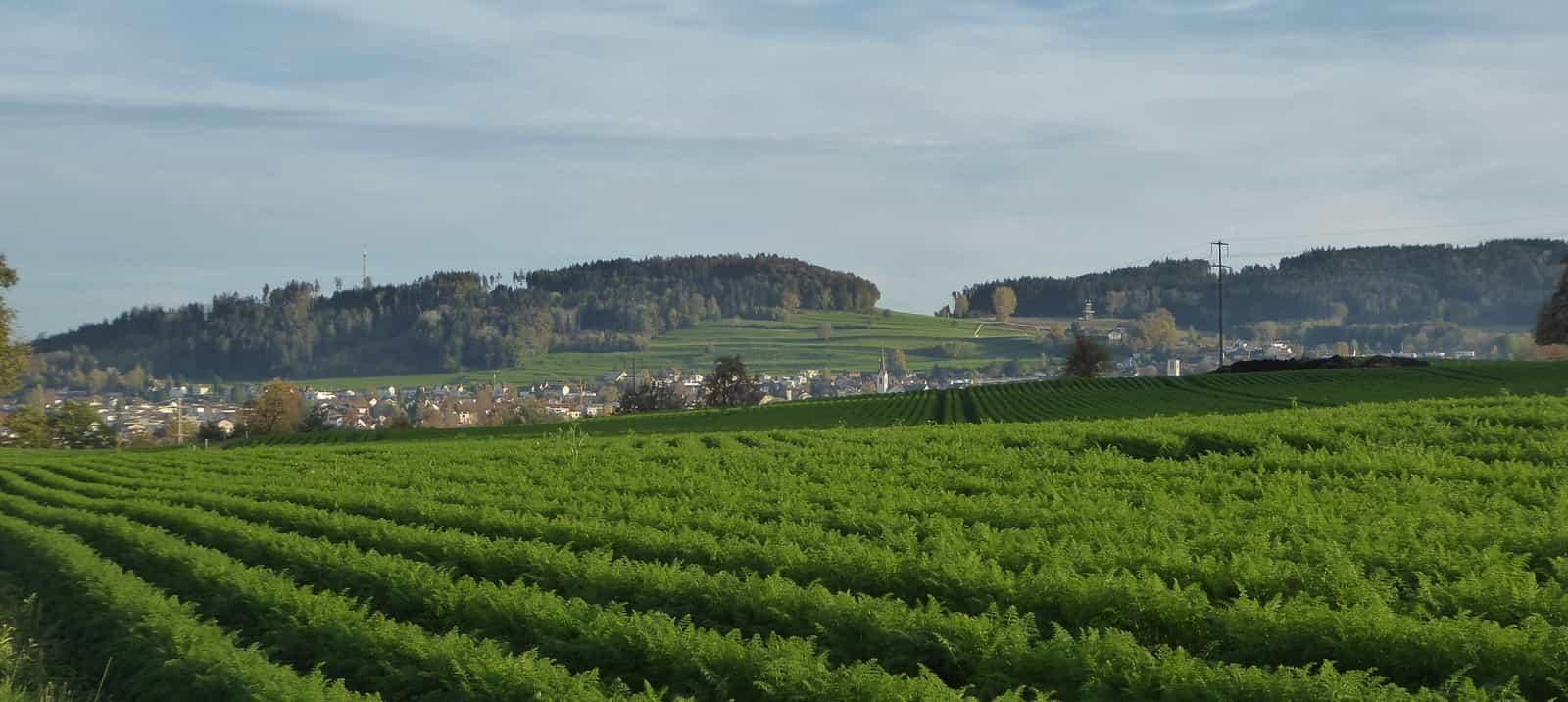 Sirnach vom Weiler Freudenberg gesehen